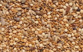 Assorted seed for exotic birds — Stock Photo