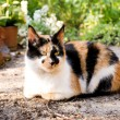 Cat in a garden — Stock Photo