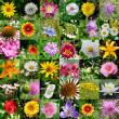Stock Photo: Collection of flowers
