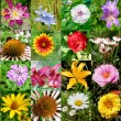 Collection of flowers — Stock Photo