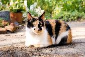 Cat in a garden — Stock Photo