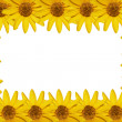 Yellow flowers frame — Stock Photo