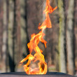 Eternal fire — Stock Photo