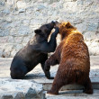 Stock Photo: Two fighting bears