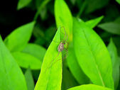 Spider on a leaf — Stock Photo