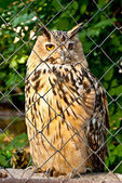 Owl in a cage — Stock Photo