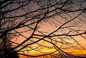 Silhouette of branches — Foto Stock