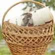 Stock Photo: BASKET,WOOD,NEEDLEWORK,
