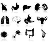 Human body organs — Stock Vector