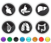 Human body organs,each color icon is set on a different layer — Stock Vector