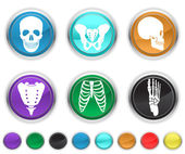 Human bone,each color icons set is set on a different layer — Stock Vector