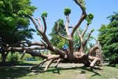 Tree at Stanley Park — Stock Photo