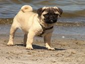 Mladý pes — Stock fotografie