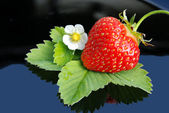 Fresh strawberry and white flower — Stock Photo
