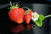 Fresh strawberries, white flowers on a black background — Stock Photo