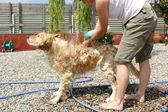 Baño de un perro — Stock Photo