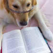 Dog book — Stock Photo
