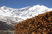 Chopped wood in the himalayan mountains — Stock Photo