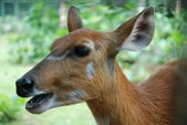Roe in a forest — Stock Photo