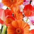 Flower bouquet — Stock Photo #5569618