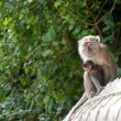 Monkey with child — Stock Photo #5870123
