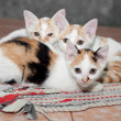 Stock Photo: Little cats