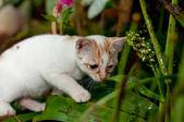 Little cat — Photo