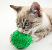 Small kitten and the clew — Stock Photo