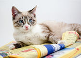 Curious kitten reading a business book — Stock Photo