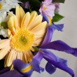 Birthday flowers — Stock Photo #5405229