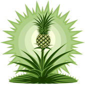 Young pineapple — Stock Vector
