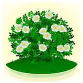 White dogrose — Stock Vector