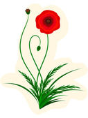 Scarlet poppy — Stock Vector