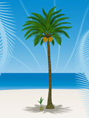 Pretty coconut tree — Stock Vector