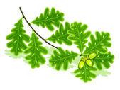 Oak branch — Stock Vector