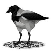 Grey a raven — Stock Vector