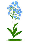 Blue forget-me-nots — Stock Vector
