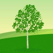 Birch tree — Stock Vector
