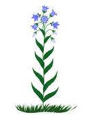 Bell flowers — Stock Vector