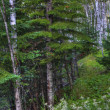 Forest in HDR — Stock Photo