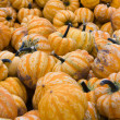 Halloween Gourds — Stock Photo #5443309