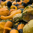 Halloween Gourds — Stock Photo #5443314