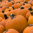 Royalty-Free Stock Photo: Pumpkins Lined up