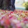 Beautiful Autumn leaves Background. — Stock Photo