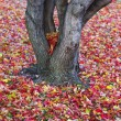 Autumn leaves Background. — Stock Photo