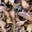 Dry Fallen Autumn Leaves Background — Stock Photo