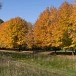 Autumns Golden Colors — Stock Photo #5443701