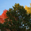 Autumn Tree Background — Stock Photo #5443774