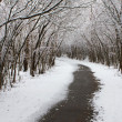 Stock Photo: Winter Walking Trail.