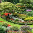 Flower garden - Stock Photo